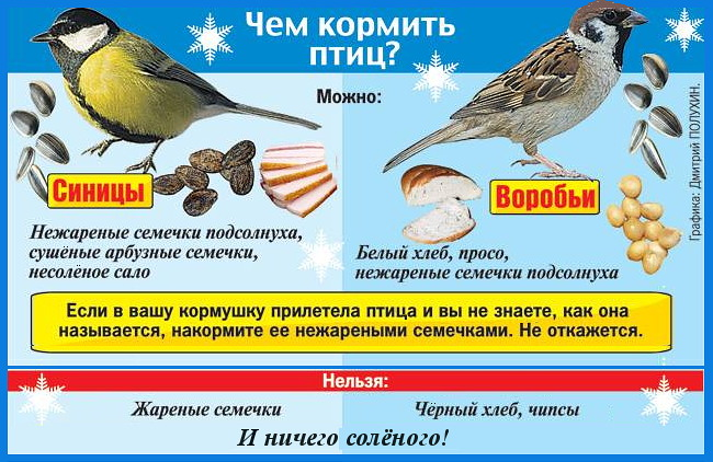Почему нельзя кормить птиц ржаным хлебом
